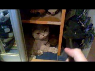 Кот реагирует на звук расчески и начинает облизываться
